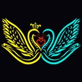 Kiss beautiful fairy swans on a black background Royalty Free Stock Photo