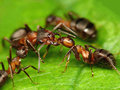 Kiss me deadly, ant Stock Photos