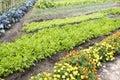 Kitchen Garden Royalty Free Stock Photo