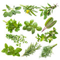 Kitchen herbs collection isolated on white background Royalty Free Stock Photography