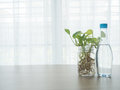 Kitchen table with bottle of water and betel tree on glass vase Royalty Free Stock Photo