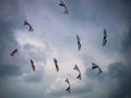 Kites against a dark sky display flying cloudy backdrop Royalty Free Stock Photo
