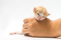 The kitten asleep in hand Royalty Free Stock Photo