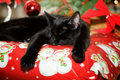 Kitten asleep under a christmas tree Royalty Free Stock Images
