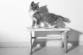 Kitten baby cat standing on a small chair Stock Photo