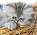 Kitten in basket Royalty Free Stock Images