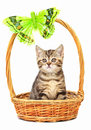 Kitten in a basket Stock Images