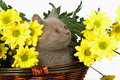 Kitten in basket with yellow flowers Stock Photos