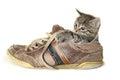 Kitten In A Big Shoe