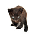 Kitten black isolated on white Royalty Free Stock Images