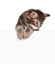Kitten with a blank cute billboard for your text over white background Royalty Free Stock Photos
