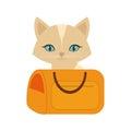 kitten blue eyes yellow pet carrier traveling Royalty Free Stock Photo