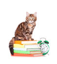 Kitten with books cute little and alarm clock over white background Royalty Free Stock Images