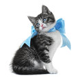 Kitten with a bow isolated on white background Stock Images