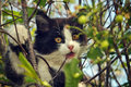 Kitten on the brenches of a tree is black and white plays branches Stock Photography