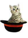 Kitten british short hair black silver tabby spotted in a hat is sitting looking at the camera Stock Images
