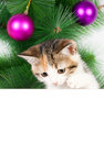 Kitten with a bulletin board on christmas decorations white message for decoration Royalty Free Stock Image