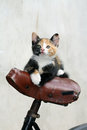 Kitten in bycicle little female cat on seat Stock Image