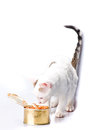 Kitten with canned food on a light background Royalty Free Stock Image