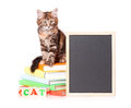 Kitten with chalkboard cute little books and blackboard over white background Stock Photos