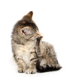 Kitten chewing its paw cute tabby baby on and taking a bath on white background Royalty Free Stock Photo