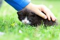 Kitten in a child hand Royalty Free Stock Image