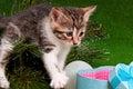Kitten on Christmas tree Royalty Free Stock Photo