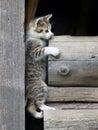 Kitten climbing on stacked wood Royalty Free Stock Photo