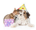 Kitten congratulates puppy happy birthday. isolated Royalty Free Stock Photo