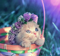 Kitten crowned clover chaplet Royalty Free Stock Photo