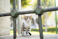 Kitten crying behind the railing Royalty Free Stock Photography