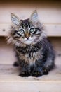 Kitten cute fluffy sitting on the stairs Royalty Free Stock Image