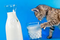 Kitten Drinking Milk Royalty Free Stock Photo