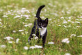 Kitten in field Stock Photography