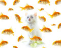 Kitten and fish Royalty Free Stock Photo