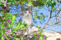 Kitten in Flowering Tree Stock Photos