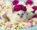 Kitten In Flowers