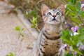 Kitten in garden Royalty Free Stock Photo
