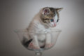 Kitten in glass cup Royalty Free Stock Photo