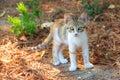 Kitten Greece