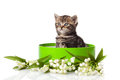 Kitten in green gift box Royalty Free Stock Photo