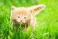 Kitten on green grass Royalty Free Stock Photos