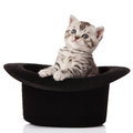 Kitten in a hat. Stock Photo