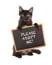 Kitten holding adopt me sign preta Fotografia de Stock Royalty Free