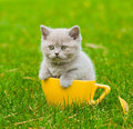 Kitten in large cup on green grass Royalty Free Stock Photo