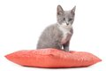 Kitten is laying on pillow isolated white background Royalty Free Stock Photo