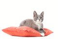 Kitten is laying on pillow isolated white background Stock Photography