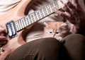 Kitten lays on man s lap who playing a guitar red shaggy looks forward to the background of men the Stock Images