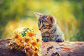 Royalty Free Stock Photo Kitten looking at flowers