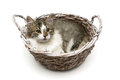 Kitten lying in a basket isolated on a white background Royalty Free Stock Photo